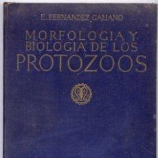 Libros antiguos: FERNÁNDEZ GALIANO, EMILIO. MORFOLOGÍA Y BIOLOGÍA DE LOS PROTOZOOS. 1921.. Lote 176621487