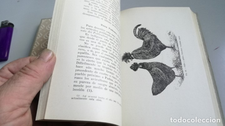 Libros antiguos: AVICULTURA - J TREVISANI - GUSTAVO GILI 1931 - VERSION ARTURO CABALLERO/ CO 31 - Foto 25 - 177626344