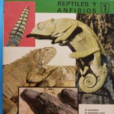 Libros antiguos: REINO ANIMAL PARA NIÑOS. CUADERNO Nº 10. REPTILES Y ANFIBIOS 1. EDITORIAL RAMON SOPENA. Lote 194267337