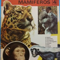 Libros antiguos: REINO ANIMAL PARA NIÑOS. CUADERNO Nº 4. MAMÍFEROS 4. EDITORIAL RAMON SOPENA. Lote 194266960