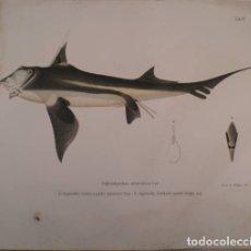 Libros antiguos: PHILIPPI, R.A: ALGUNOS PECES DE CHILE. 1892. MEDIA PIEL. Lote 178976725