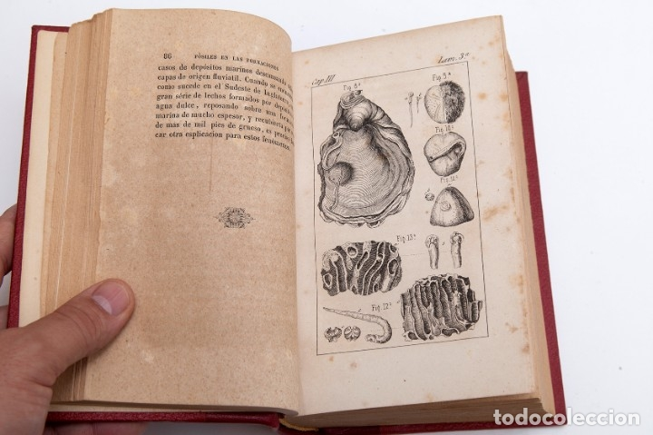 Libros antiguos: CHARLES LYELL : ELEMENTOS DE GEOLOGIA,1847, 42+1 LAMINAS , COMPLETO - 1847 - Foto 5 - 83667604