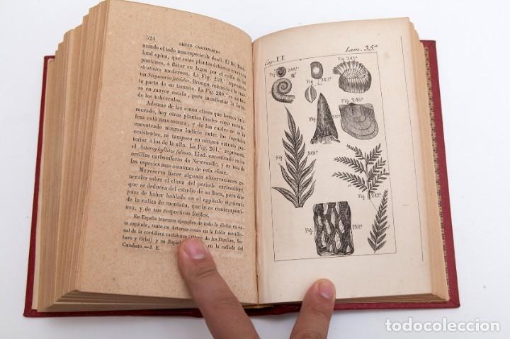 Libros antiguos: CHARLES LYELL : ELEMENTOS DE GEOLOGIA,1847, 42+1 LAMINAS , COMPLETO - 1847 - Foto 13 - 83667604