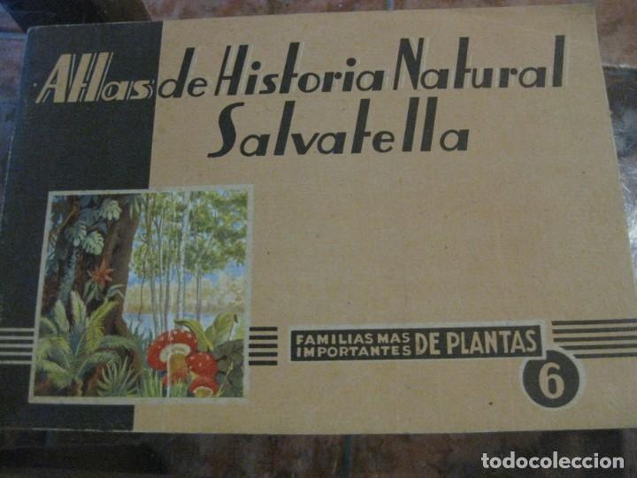 ATLAS HISTORIA NATURAL SALVATELLA Nº 6 FAMILIAS DE PLANTAS . 1 EDICION (Libros Antiguos, Raros y Curiosos - Ciencias, Manuales y Oficios - Bilogía y Botánica)