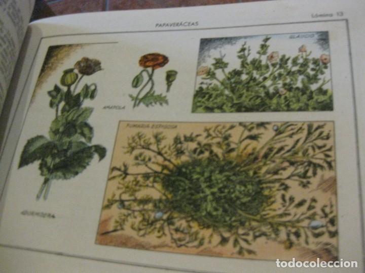 Libros antiguos: atlas historia natural salvatella nº 6 familias de plantas . 1 edicion - Foto 2 - 180087606