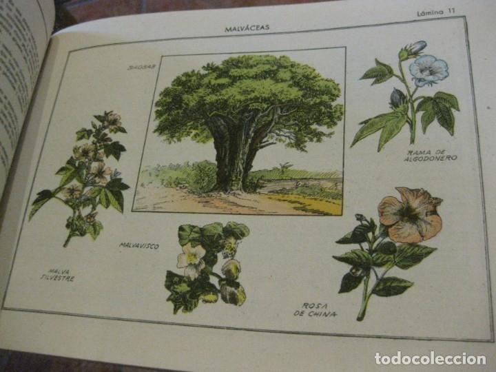 Libros antiguos: atlas historia natural salvatella nº 6 familias de plantas . 1 edicion - Foto 3 - 180087606
