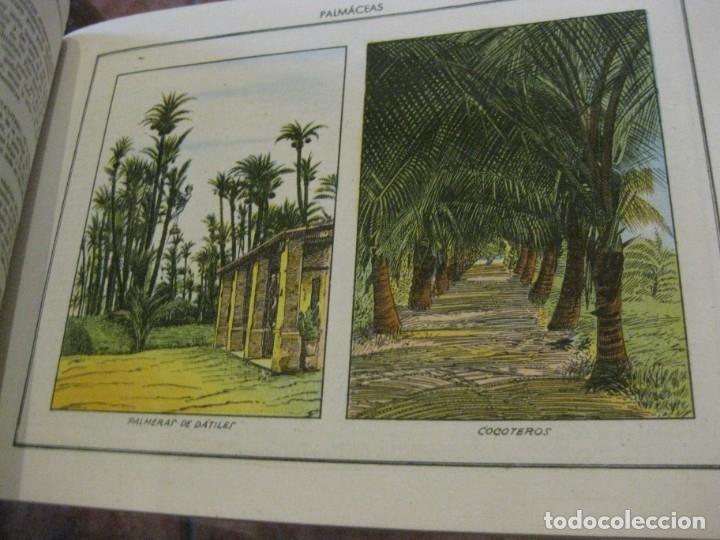 Libros antiguos: atlas historia natural salvatella nº 6 familias de plantas . 1 edicion - Foto 4 - 180087606