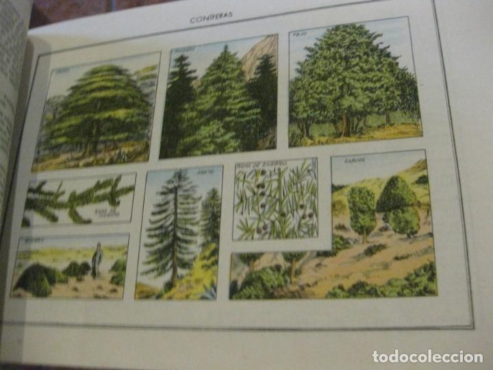 Libros antiguos: atlas historia natural salvatella nº 6 familias de plantas . 1 edicion - Foto 5 - 180087606
