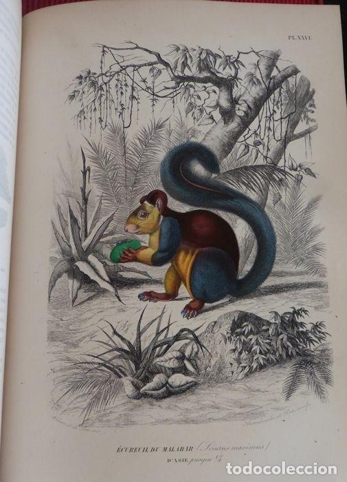 PAUL GERVAIS - HISTOIRE NATURELLE DES MAMMIFÈRES - 2 VOLUMES - 1854/1855 (Libros Antiguos, Raros y Curiosos - Ciencias, Manuales y Oficios - Bilogía y Botánica)