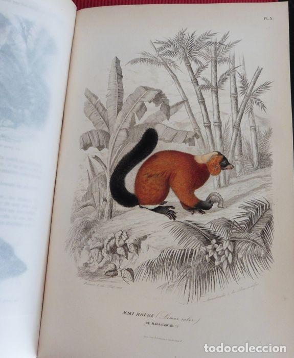 Libros antiguos: Paul Gervais - Histoire naturelle des Mammifères - 2 volumes - 1854/1855 - Foto 3 - 183014178