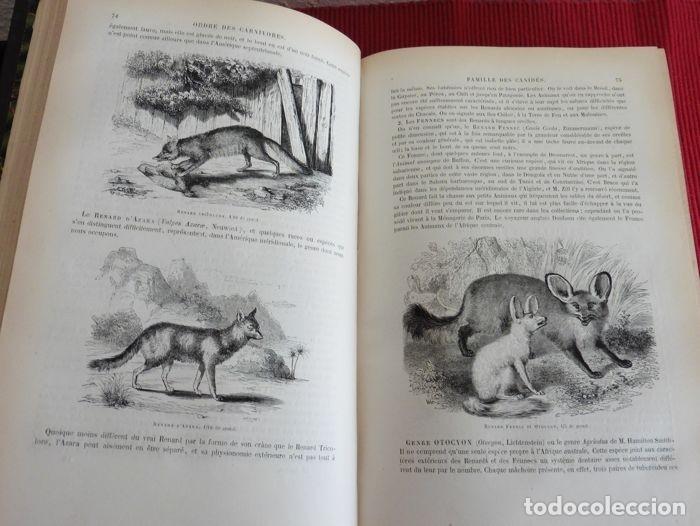 Libros antiguos: Paul Gervais - Histoire naturelle des Mammifères - 2 volumes - 1854/1855 - Foto 5 - 183014178