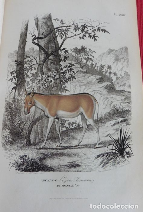 Libros antiguos: Paul Gervais - Histoire naturelle des Mammifères - 2 volumes - 1854/1855 - Foto 7 - 183014178