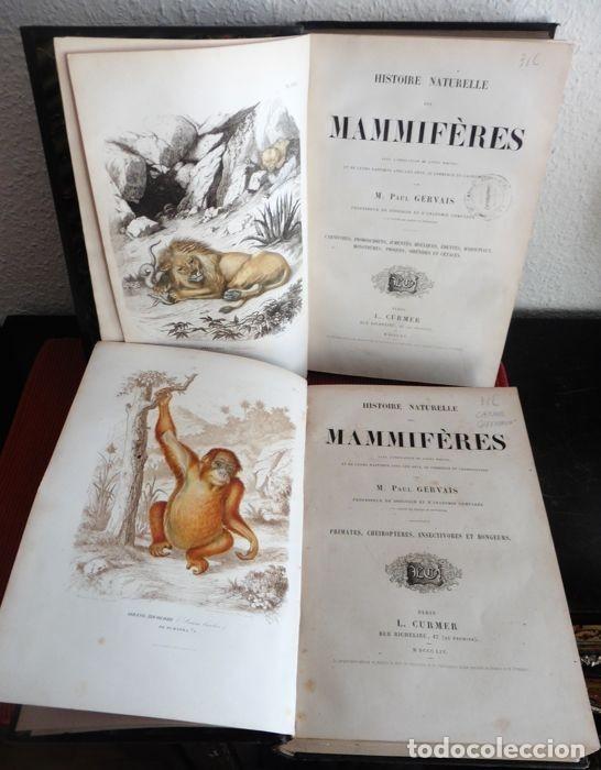 Libros antiguos: Paul Gervais - Histoire naturelle des Mammifères - 2 volumes - 1854/1855 - Foto 8 - 183014178