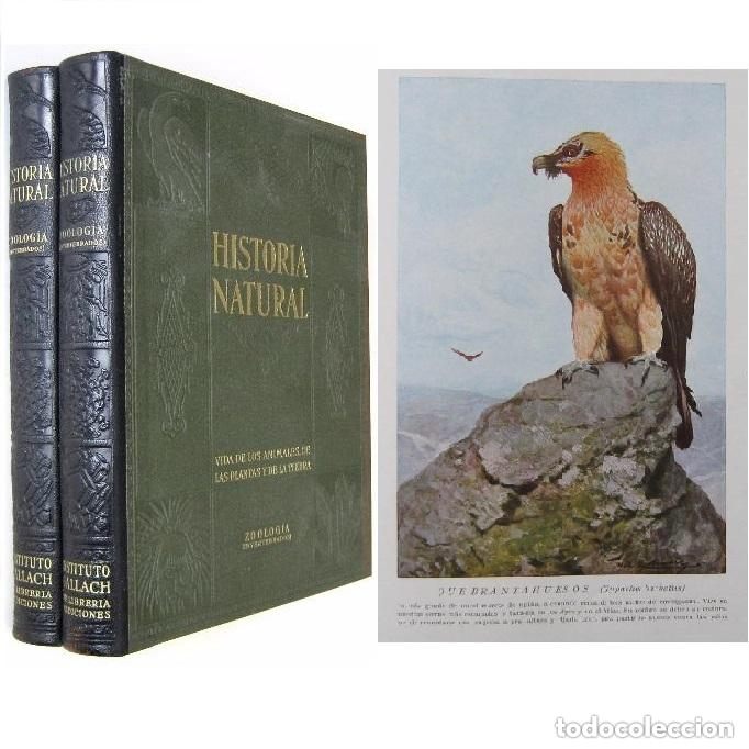 1935. ZOOLOGÍA - 2 ENORMES TOMOS ILUSTRADOS - BIOLOGÍA, ANIMALES, MAMÍFEROS, AVES, PECES, CRUSTÁCEOS (Libros Antiguos, Raros y Curiosos - Ciencias, Manuales y Oficios - Bilogía y Botánica)