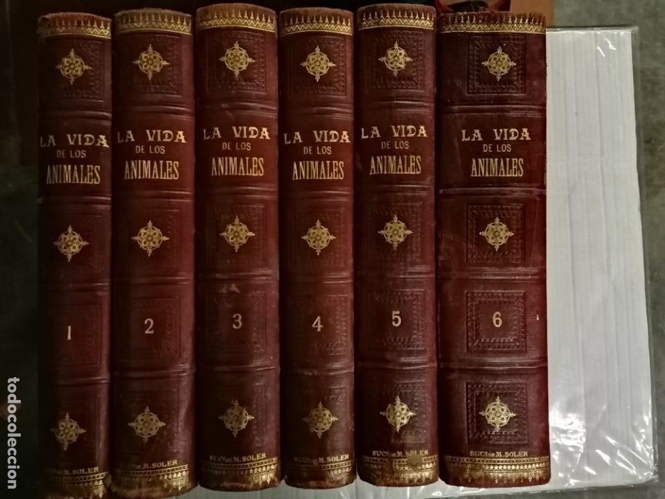 LA VIDA DE LOS ANIMALES DR.A.E.BRHEM TRADUCCIÓN FERNANDEZ CASTRO VERDE 1880-1883 6 TOMOS (Libros Antiguos, Raros y Curiosos - Ciencias, Manuales y Oficios - Bilogía y Botánica)