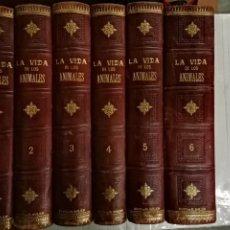 Libros antiguos: LA VIDA DE LOS ANIMALES DR.A.E.BRHEM TRADUCCIÓN FERNANDEZ CASTRO VERDE 1880-1883 6 TOMOS. Lote 183693518