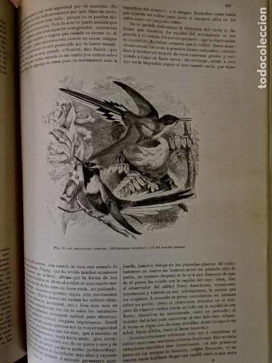 Libros antiguos: LA VIDA DE LOS ANIMALES DR.A.E.BRHEM TRADUCCIÓN FERNANDEZ CASTRO VERDE 1880-1883 6 TOMOS - Foto 3 - 183693518