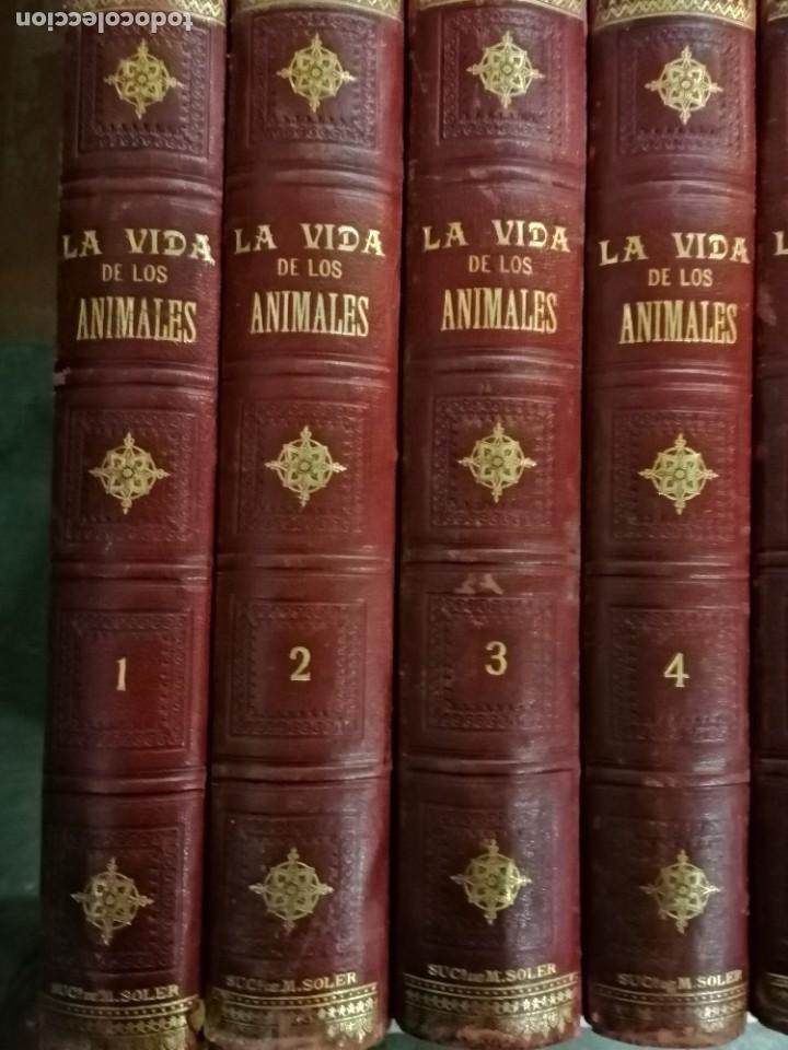 Libros antiguos: LA VIDA DE LOS ANIMALES DR.A.E.BRHEM TRADUCCIÓN FERNANDEZ CASTRO VERDE 1880-1883 6 TOMOS - Foto 4 - 183693518