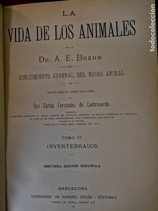 Libros antiguos: LA VIDA DE LOS ANIMALES DR.A.E.BRHEM TRADUCCIÓN FERNANDEZ CASTRO VERDE 1880-1883 6 TOMOS - Foto 5 - 183693518
