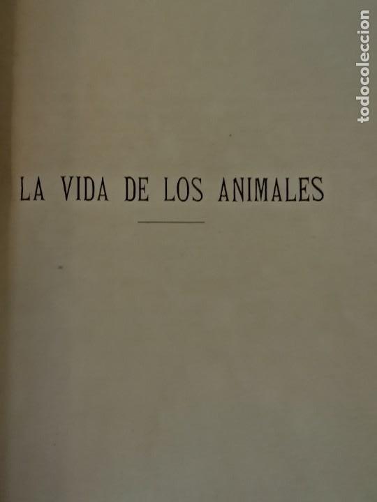Libros antiguos: LA VIDA DE LOS ANIMALES DR.A.E.BRHEM TRADUCCIÓN FERNANDEZ CASTRO VERDE 1880-1883 6 TOMOS - Foto 6 - 183693518
