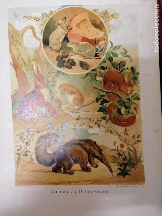 Libros antiguos: LA VIDA DE LOS ANIMALES DR.A.E.BRHEM TRADUCCIÓN FERNANDEZ CASTRO VERDE 1880-1883 6 TOMOS - Foto 8 - 183693518