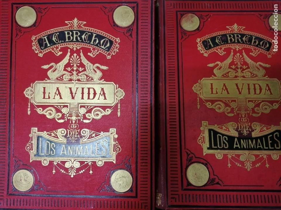 Libros antiguos: LA VIDA DE LOS ANIMALES DR.A.E.BRHEM TRADUCCIÓN FERNANDEZ CASTRO VERDE 1880-1883 6 TOMOS - Foto 9 - 183693518