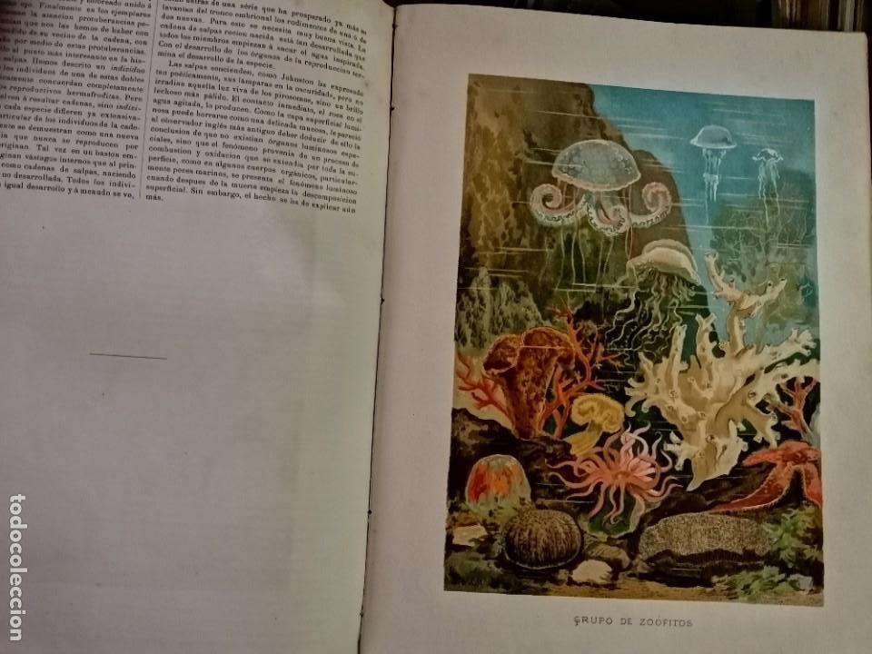 Libros antiguos: LA VIDA DE LOS ANIMALES DR.A.E.BRHEM TRADUCCIÓN FERNANDEZ CASTRO VERDE 1880-1883 6 TOMOS - Foto 10 - 183693518