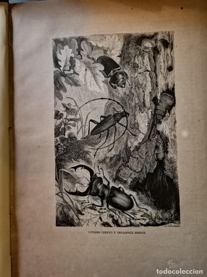 Libros antiguos: LA VIDA DE LOS ANIMALES DR.A.E.BRHEM TRADUCCIÓN FERNANDEZ CASTRO VERDE 1880-1883 6 TOMOS - Foto 12 - 183693518