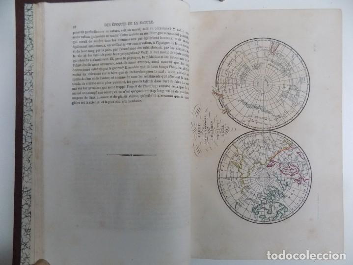 Libros antiguos: LIBRERIA GHOTICA. EXCEPCIONAL OBRA FRANCESA DE BUFFON.1852. OBRA COMPLETA 9 VOLUMENES FOLIO.GRABADOS - Foto 7 - 183743393