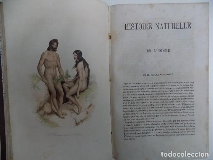 Libros antiguos: LIBRERIA GHOTICA. EXCEPCIONAL OBRA FRANCESA DE BUFFON.1852. OBRA COMPLETA 9 VOLUMENES FOLIO.GRABADOS - Foto 8 - 183743393