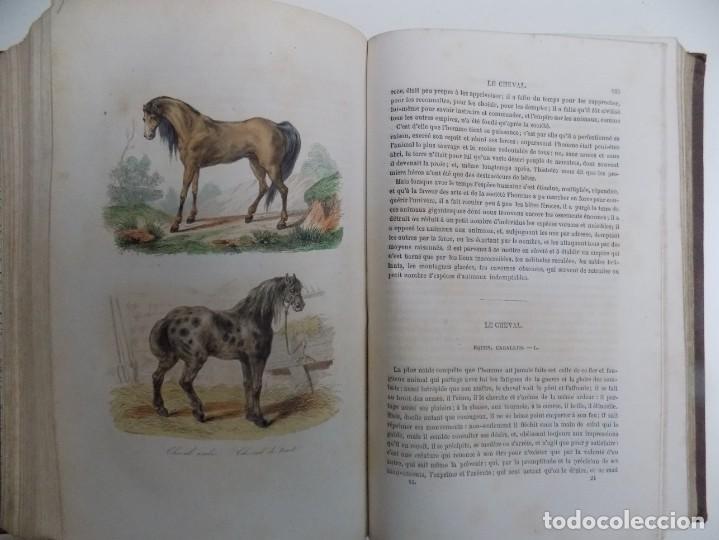 Libros antiguos: LIBRERIA GHOTICA. EXCEPCIONAL OBRA FRANCESA DE BUFFON.1852. OBRA COMPLETA 9 VOLUMENES FOLIO.GRABADOS - Foto 11 - 183743393