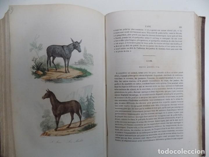 Libros antiguos: LIBRERIA GHOTICA. EXCEPCIONAL OBRA FRANCESA DE BUFFON.1852. OBRA COMPLETA 9 VOLUMENES FOLIO.GRABADOS - Foto 12 - 183743393