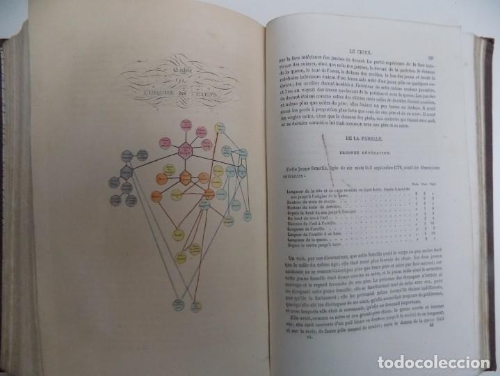 Libros antiguos: LIBRERIA GHOTICA. EXCEPCIONAL OBRA FRANCESA DE BUFFON.1852. OBRA COMPLETA 9 VOLUMENES FOLIO.GRABADOS - Foto 13 - 183743393