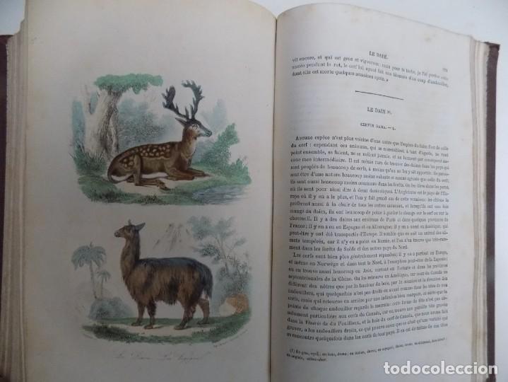 Libros antiguos: LIBRERIA GHOTICA. EXCEPCIONAL OBRA FRANCESA DE BUFFON.1852. OBRA COMPLETA 9 VOLUMENES FOLIO.GRABADOS - Foto 14 - 183743393