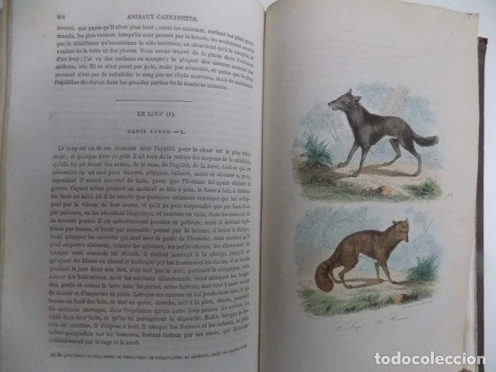 Libros antiguos: LIBRERIA GHOTICA. EXCEPCIONAL OBRA FRANCESA DE BUFFON.1852. OBRA COMPLETA 9 VOLUMENES FOLIO.GRABADOS - Foto 15 - 183743393