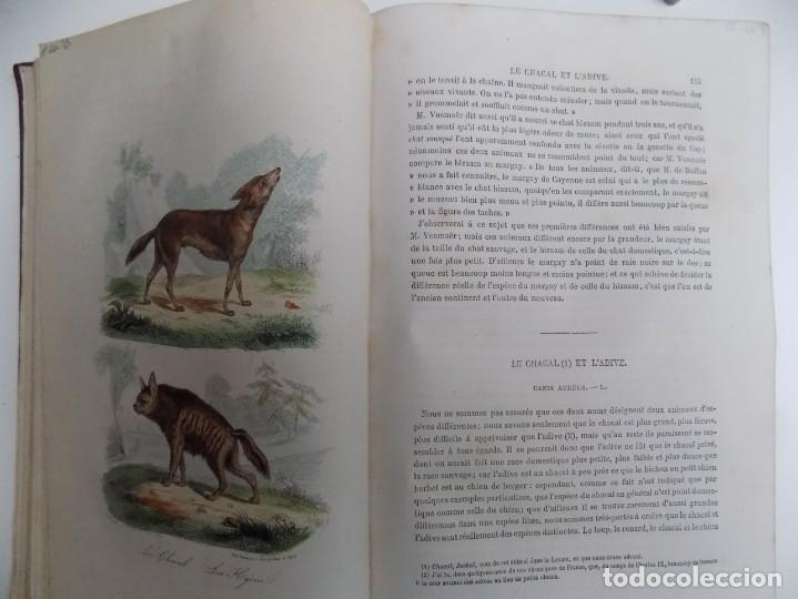 Libros antiguos: LIBRERIA GHOTICA. EXCEPCIONAL OBRA FRANCESA DE BUFFON.1852. OBRA COMPLETA 9 VOLUMENES FOLIO.GRABADOS - Foto 16 - 183743393