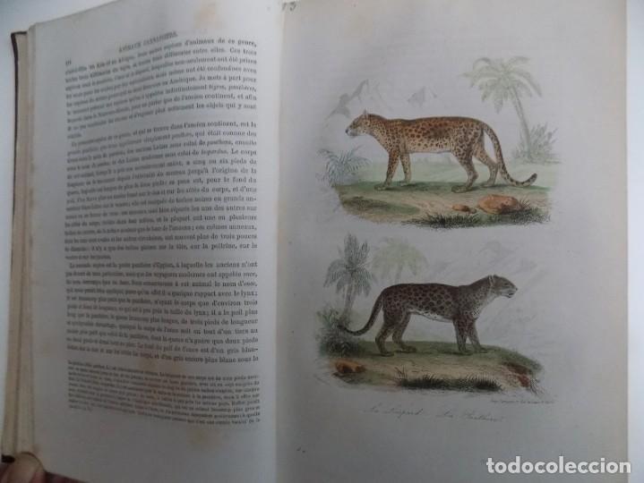 Libros antiguos: LIBRERIA GHOTICA. EXCEPCIONAL OBRA FRANCESA DE BUFFON.1852. OBRA COMPLETA 9 VOLUMENES FOLIO.GRABADOS - Foto 17 - 183743393