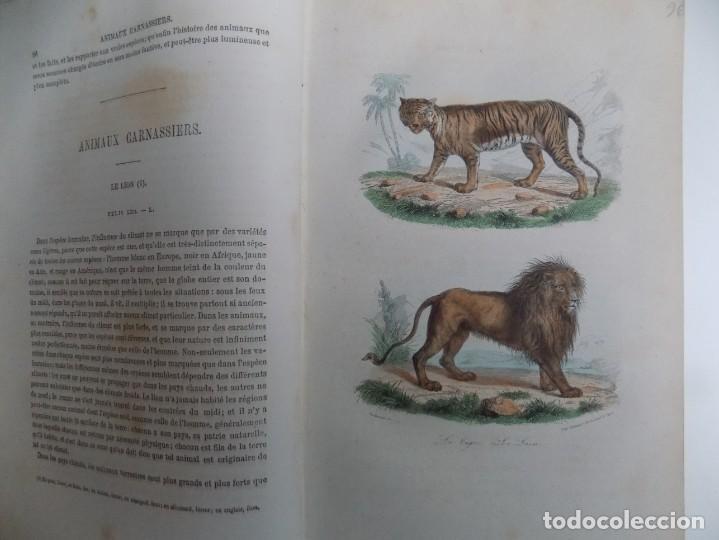 Libros antiguos: LIBRERIA GHOTICA. EXCEPCIONAL OBRA FRANCESA DE BUFFON.1852. OBRA COMPLETA 9 VOLUMENES FOLIO.GRABADOS - Foto 18 - 183743393