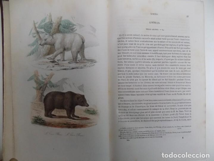 Libros antiguos: LIBRERIA GHOTICA. EXCEPCIONAL OBRA FRANCESA DE BUFFON.1852. OBRA COMPLETA 9 VOLUMENES FOLIO.GRABADOS - Foto 19 - 183743393