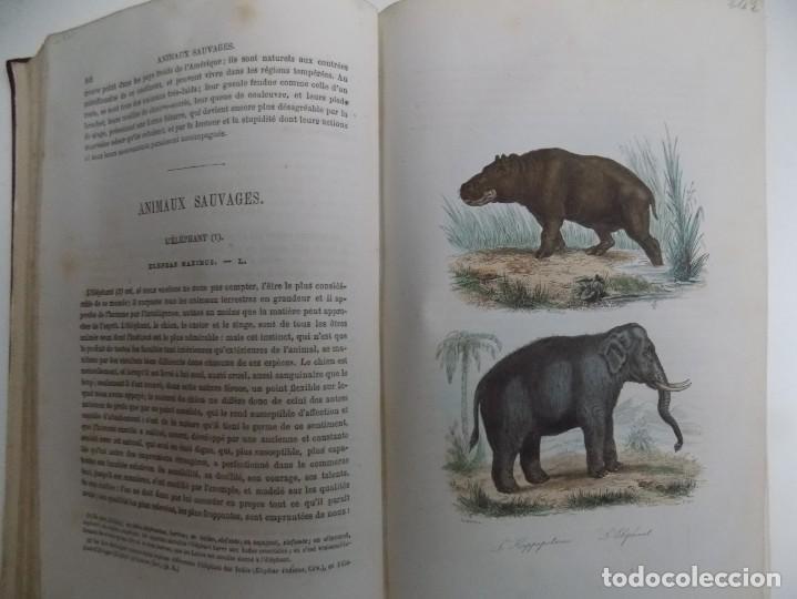 Libros antiguos: LIBRERIA GHOTICA. EXCEPCIONAL OBRA FRANCESA DE BUFFON.1852. OBRA COMPLETA 9 VOLUMENES FOLIO.GRABADOS - Foto 22 - 183743393