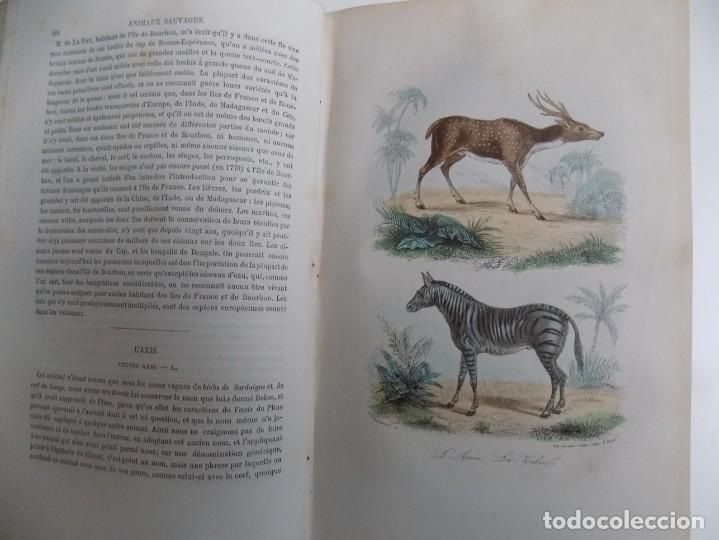 Libros antiguos: LIBRERIA GHOTICA. EXCEPCIONAL OBRA FRANCESA DE BUFFON.1852. OBRA COMPLETA 9 VOLUMENES FOLIO.GRABADOS - Foto 23 - 183743393