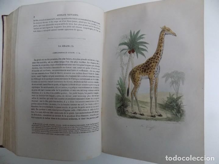 Libros antiguos: LIBRERIA GHOTICA. EXCEPCIONAL OBRA FRANCESA DE BUFFON.1852. OBRA COMPLETA 9 VOLUMENES FOLIO.GRABADOS - Foto 24 - 183743393
