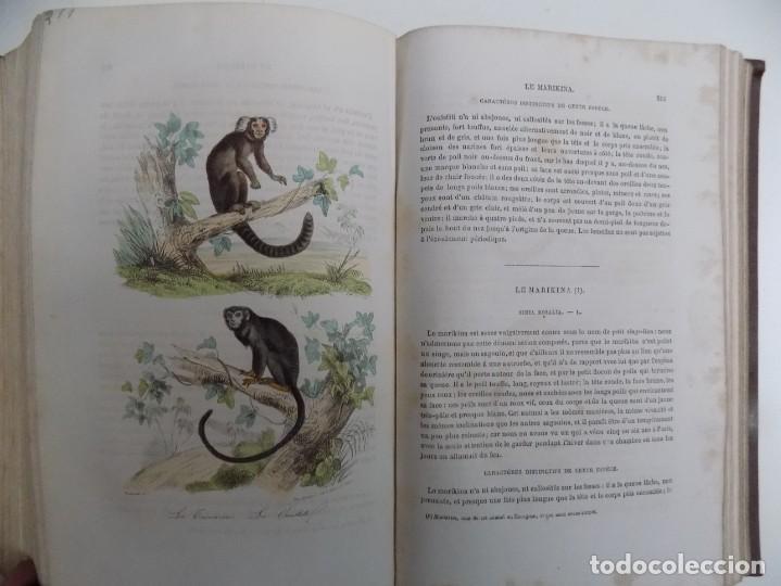 Libros antiguos: LIBRERIA GHOTICA. EXCEPCIONAL OBRA FRANCESA DE BUFFON.1852. OBRA COMPLETA 9 VOLUMENES FOLIO.GRABADOS - Foto 25 - 183743393