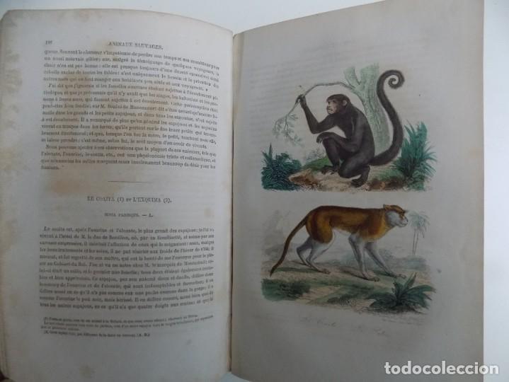 Libros antiguos: LIBRERIA GHOTICA. EXCEPCIONAL OBRA FRANCESA DE BUFFON.1852. OBRA COMPLETA 9 VOLUMENES FOLIO.GRABADOS - Foto 26 - 183743393