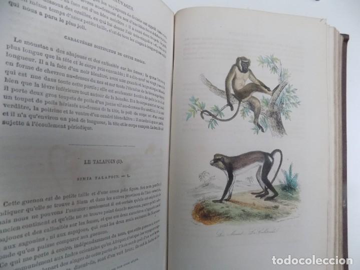 Libros antiguos: LIBRERIA GHOTICA. EXCEPCIONAL OBRA FRANCESA DE BUFFON.1852. OBRA COMPLETA 9 VOLUMENES FOLIO.GRABADOS - Foto 27 - 183743393