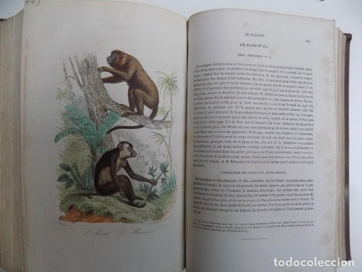 Libros antiguos: LIBRERIA GHOTICA. EXCEPCIONAL OBRA FRANCESA DE BUFFON.1852. OBRA COMPLETA 9 VOLUMENES FOLIO.GRABADOS - Foto 28 - 183743393