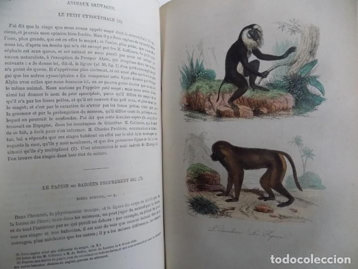Libros antiguos: LIBRERIA GHOTICA. EXCEPCIONAL OBRA FRANCESA DE BUFFON.1852. OBRA COMPLETA 9 VOLUMENES FOLIO.GRABADOS - Foto 29 - 183743393