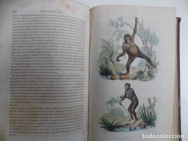 Libros antiguos: LIBRERIA GHOTICA. EXCEPCIONAL OBRA FRANCESA DE BUFFON.1852. OBRA COMPLETA 9 VOLUMENES FOLIO.GRABADOS - Foto 30 - 183743393
