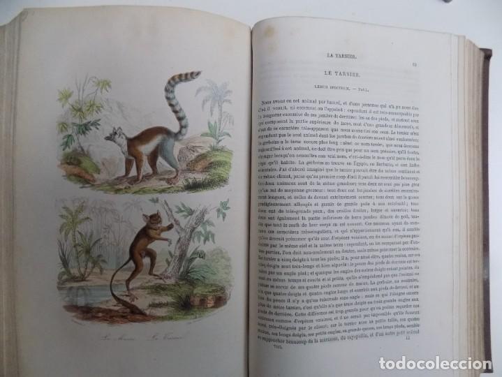 Libros antiguos: LIBRERIA GHOTICA. EXCEPCIONAL OBRA FRANCESA DE BUFFON.1852. OBRA COMPLETA 9 VOLUMENES FOLIO.GRABADOS - Foto 31 - 183743393