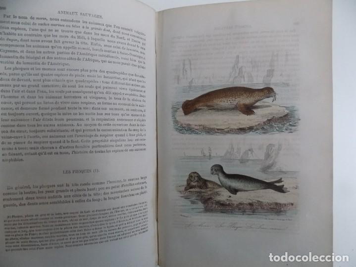 Libros antiguos: LIBRERIA GHOTICA. EXCEPCIONAL OBRA FRANCESA DE BUFFON.1852. OBRA COMPLETA 9 VOLUMENES FOLIO.GRABADOS - Foto 32 - 183743393